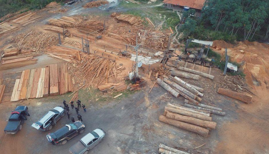 PF deflagra Operação Ka'apor no Maranhão contra extração ilegal de madeira