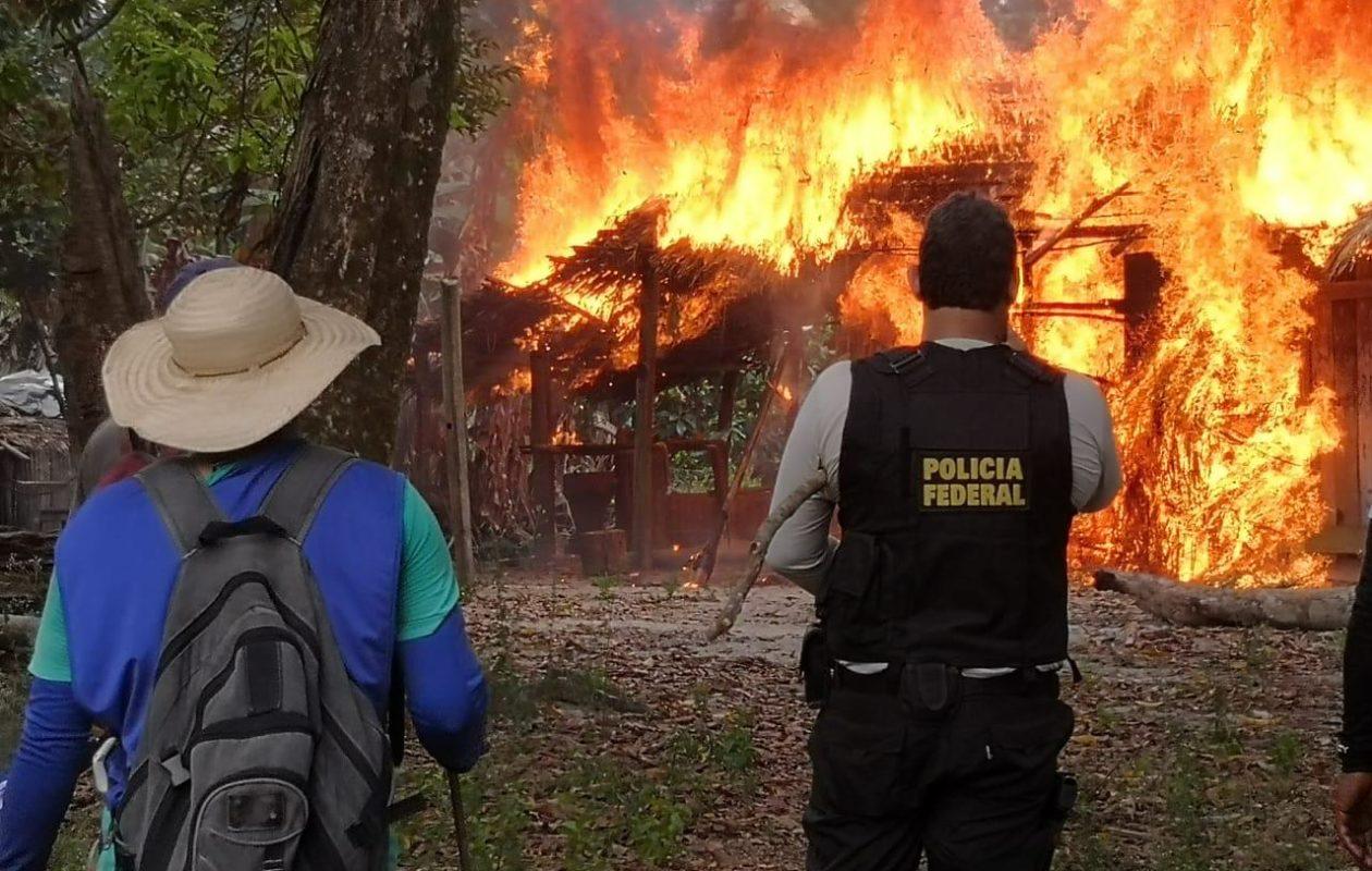PF destrói 360 mil pés de maconha no Maranhão e no Pará