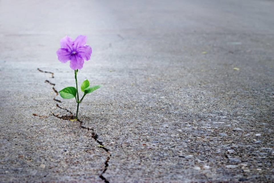 A vida seguirá seu fluxo